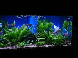 another example of a fish tank
