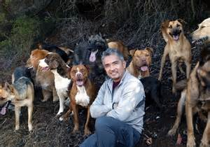 Cesar and His Pack